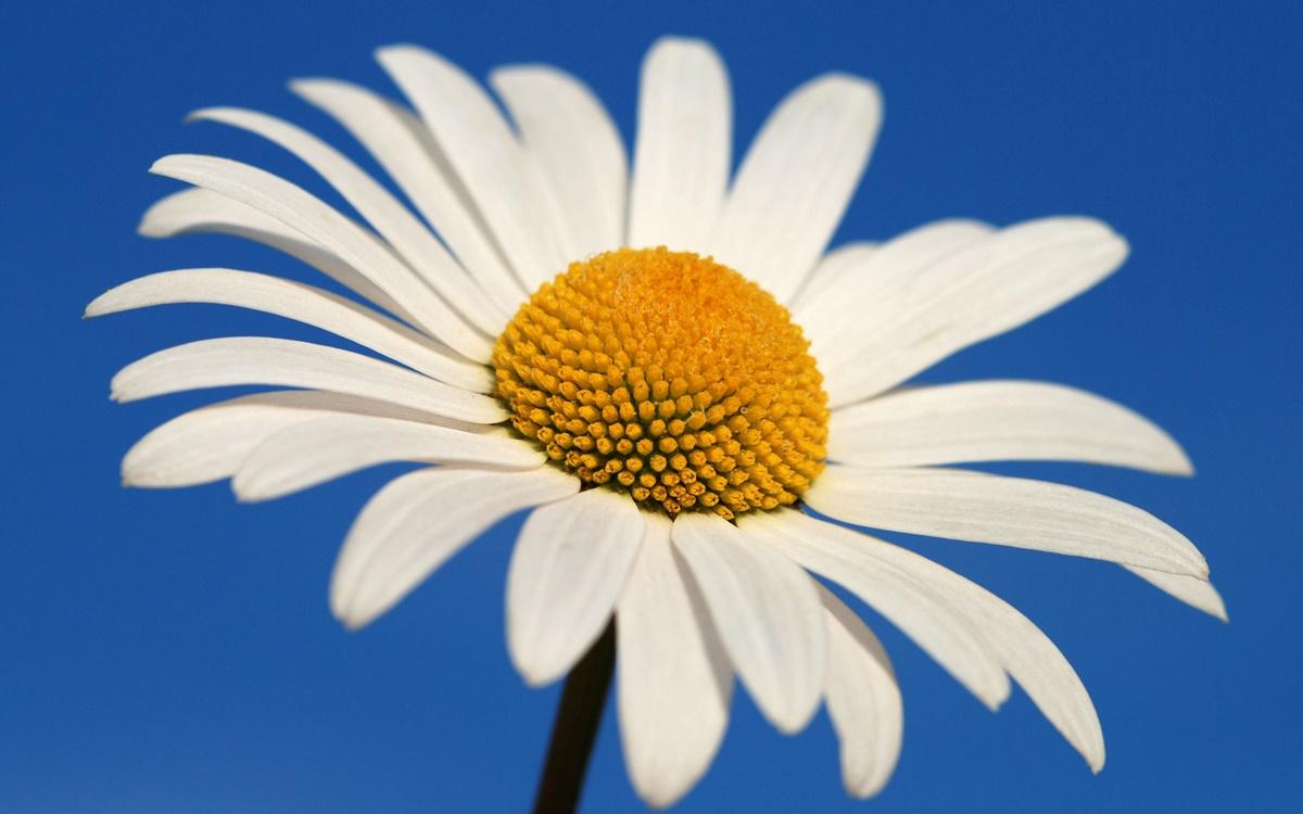 Yapraklar Ve Altın Oran – Kusursuz Yaratılış